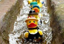 Google передал поисковику DuckDuckGo права на домен Duck.com