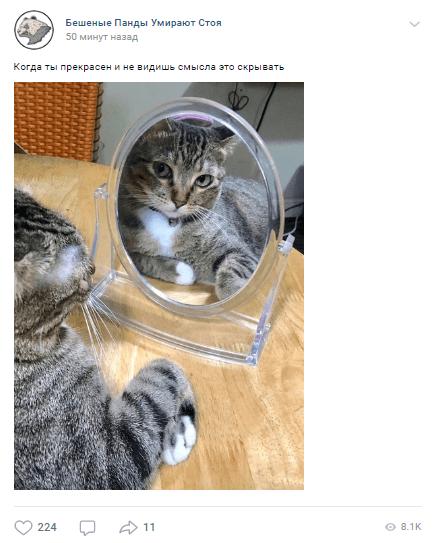 Интересный контент на день кошек