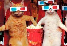 Масслукинг: что это и как настроить массовый просмотр сторис в Инстаграм
