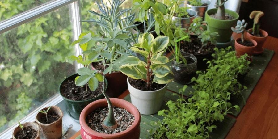 Выращивание растений на дому как бизнес идея для женщин