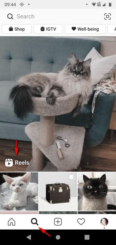 Как попасть в рекомендации Instagram Reels: примеры, хэштеги, советы
